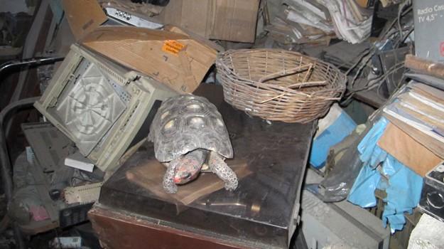 Termite Control Chandler, Tortoise Survives on Termites